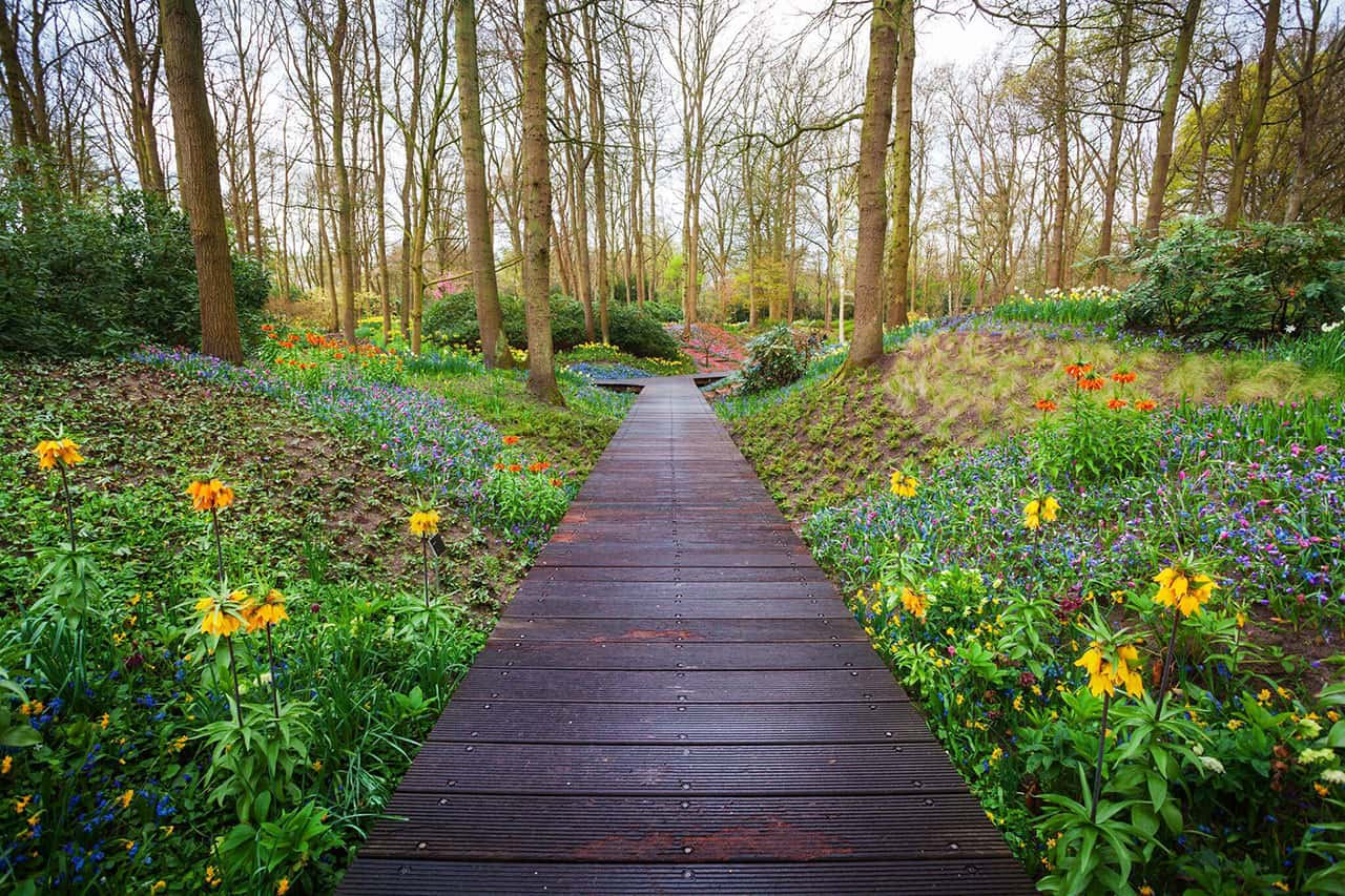 Wooden-walkway-through-the-Keukenhof-park-in-Netherlands-537463274_5616x3744_preview_preview.jpg